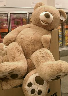 Romantic gifts like these Costco teddy bears are on the decline. (Internet Photo)