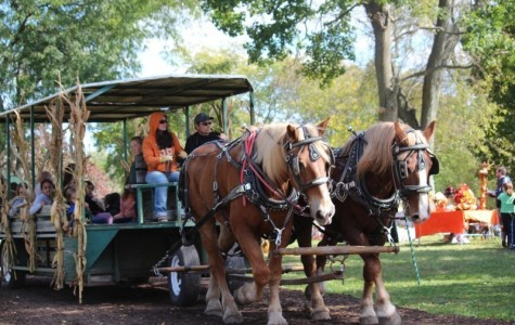 Palatine Park District hosts fall festivities